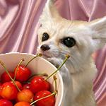 99px.ru аватар Лис фенек нюхает чашку с черешнями