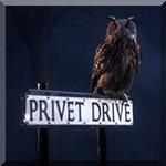 99px.ru аватар Почтовая сова из книг про Гарри Поттера сидит на табличке-указателе с названием улицы Privet Drive (перевод: Бирючинная аллея, или по традиции - Тисовая улица)
