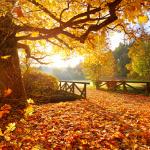 99px.ru аватар Городской парк усыпан осенней листвой