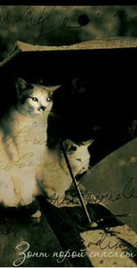 Обои Зонт порой спасает, кошки под зонтом