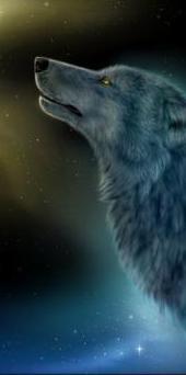 Аватар вконтакте волк на фоне ночного неба