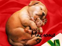 99px.ru аватар Масюня