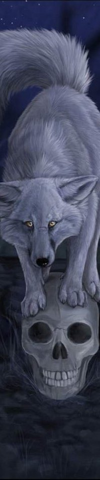 Обои Волк на черепе