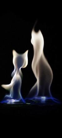 Аватар вконтакте Кошки из пара