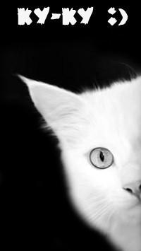 Обои Ку-ку :) Белый котенок выглядывает