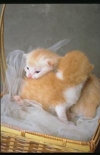 Обои Котятки