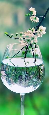 Обои цветущая ветка в бокале с водой