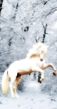 Обои белая лошадь в лесу