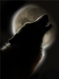 Обои волк воет на луну