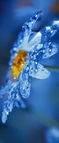 Обои капельки воды на цветке
