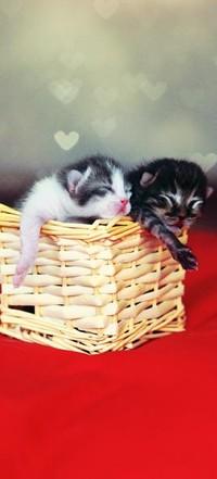 Аватар вконтакте два котенка в корзине