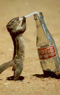 Обои coca-cola