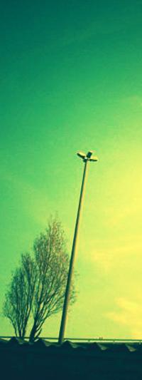 Обои Крыша, столб, дерево и зеленое небо