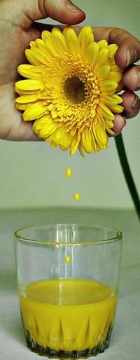 Обои сок с цветка