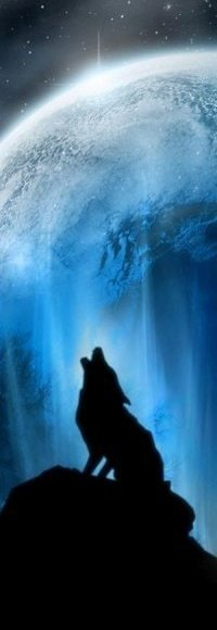 Обои Воющий волк на луну