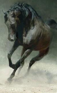 Обои Конь