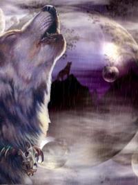 Обои Волк и собака