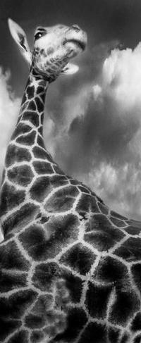 Обои Жираф на фоне неба