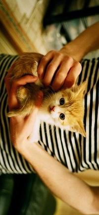 Аватар вконтакте парень держит котенка