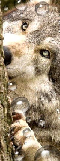 Обои Волк возле дерева