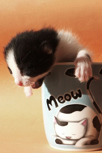 Аватар вконтакте Слепой котенок в кружке Meow