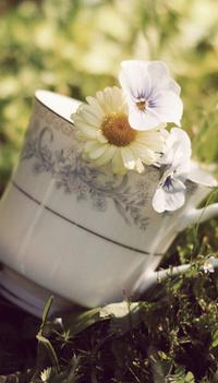 Обои Чайная чашка с цветочками