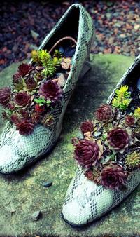 Обои В туфлях цветы