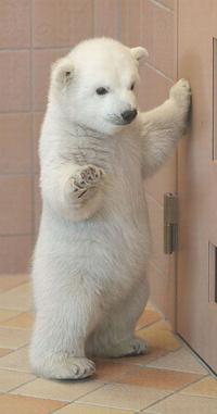 Обои Маленький белый медвежонок
