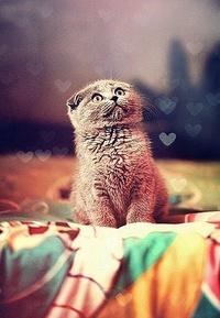 Аватар вконтакте Милый котик