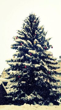 Аватар вконтакте Новогодняя елка