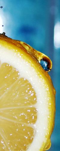 Обои Лимон с капелькой
