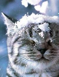 Аватар вконтакте Кот из рекламы Вискас