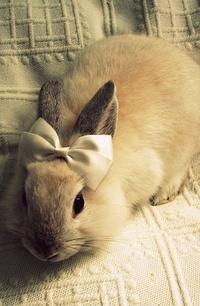 Фото кролика на аву в вк