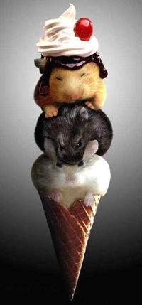 Аватар вконтакте Милые грызуны в рожке от мороженого