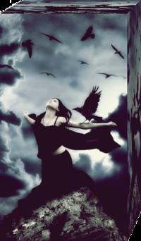 Обои Я ворона