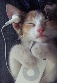 Обои Кот слушает музыку