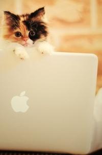 Аватар вконтакте Котенок на ноутбуке Apple