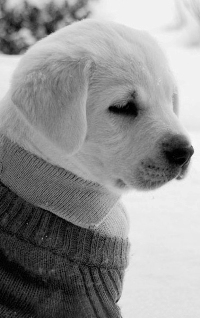 Снег собаки аватары вконтакте 15