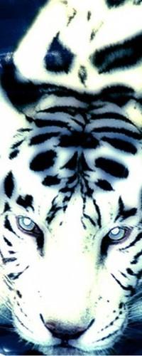 Аватар вконтакте Белый тигр