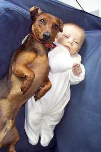 Обои Малыш с собакой