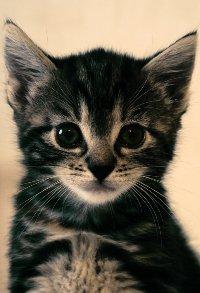 Фото для авы котята