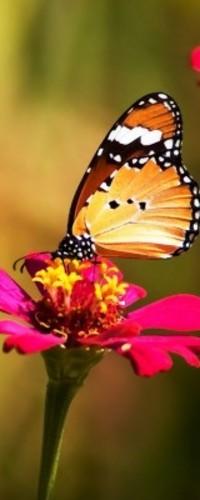Обои Бабочка на цветке