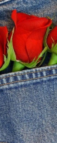 Обои Розы в кармане