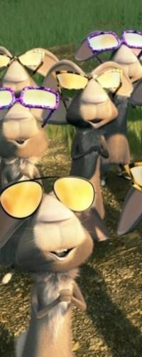 Обои Кролики смотрят на солнце