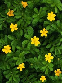 Обои Ковёр жёлтых цветов