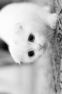 Аватар вконтакте Белый кот с большими глазами