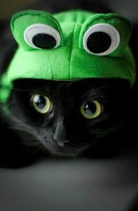 Про лягушку и кота