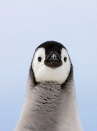 99px.ru аватар Пингвин