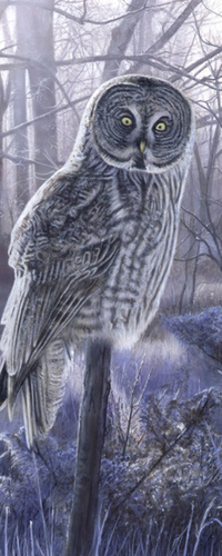 Аватар вконтакте Красивая сова сидит на ветке