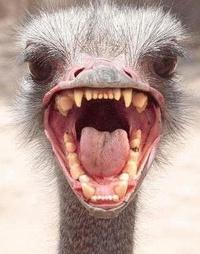 Обои Коллаж. Голова страуса явно не со своими зубами